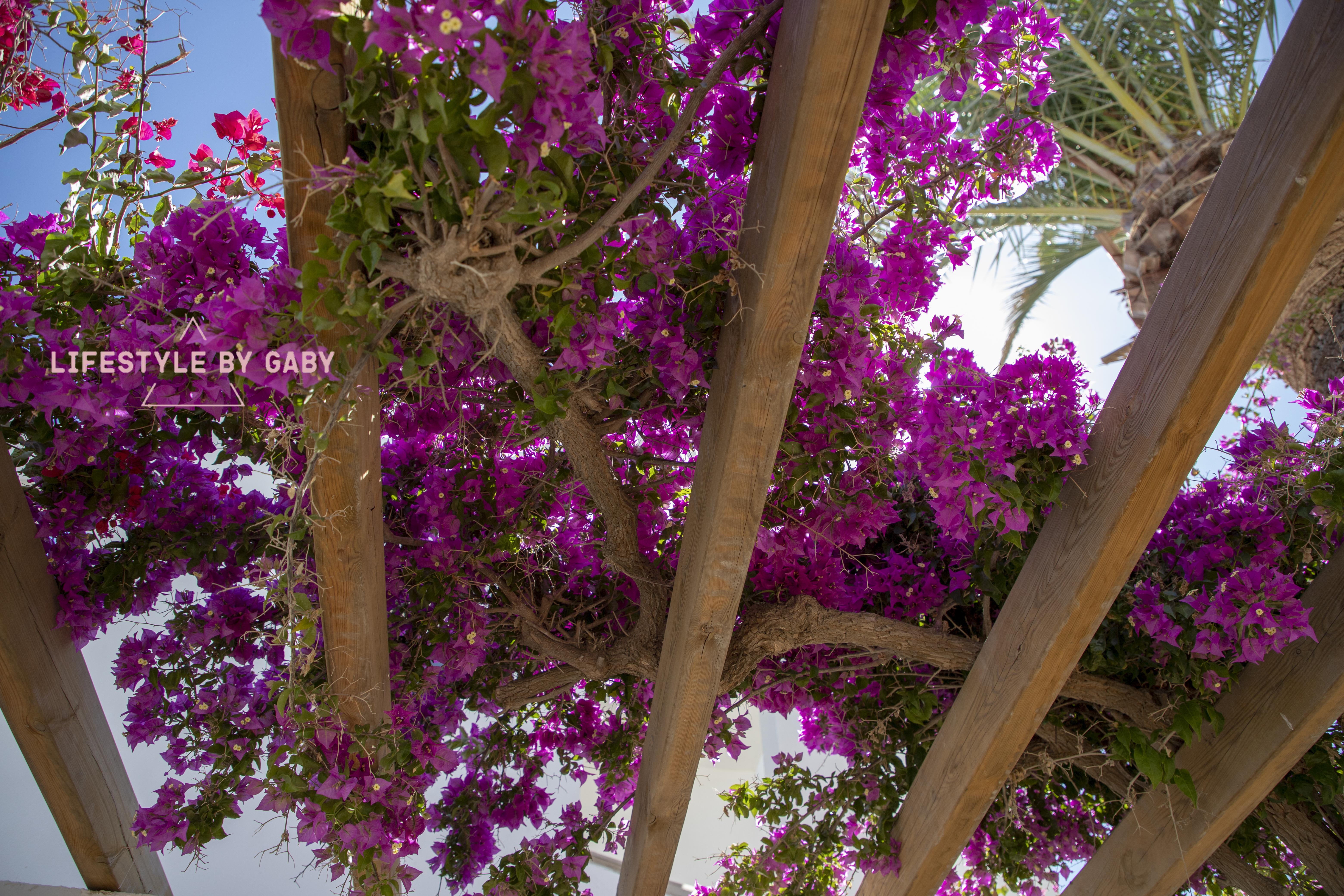 #26. Mijn vakantie in Costa Del Sol deel 2