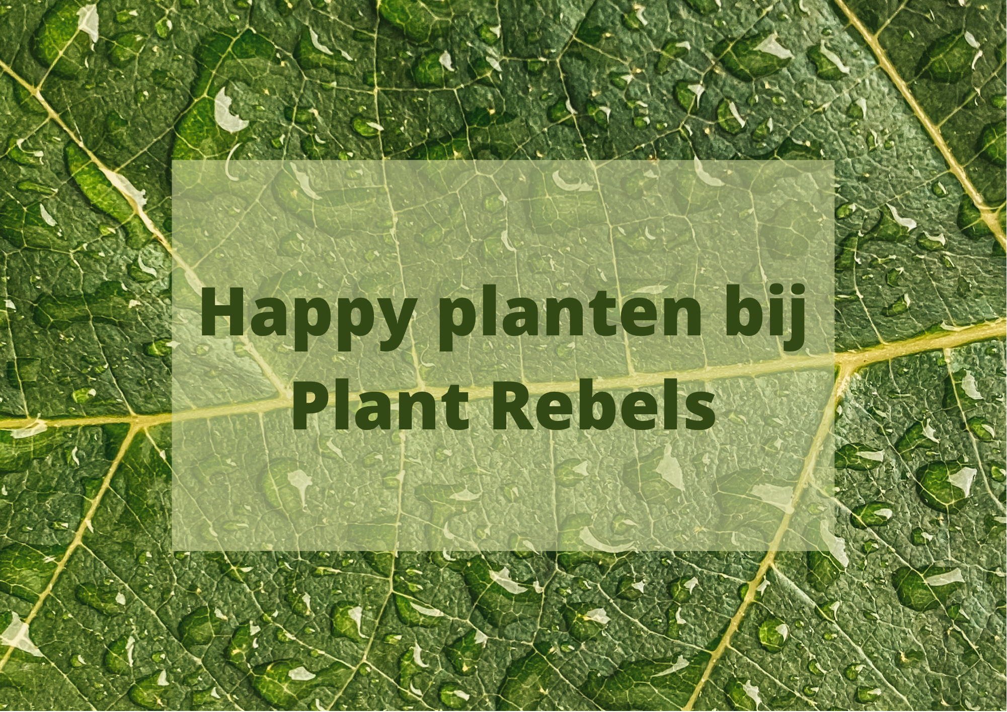 #51. Richt je huis leuk in met Plantrebelz.nl